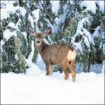 view large image and full details for Blizzard Deer L140